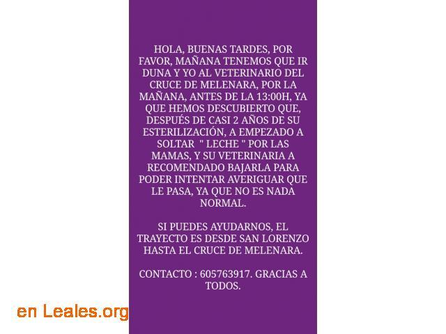 TRANSPORTE SOLIDARIO AL VETERINARIO!!