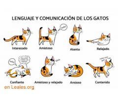 Diccionario Felino