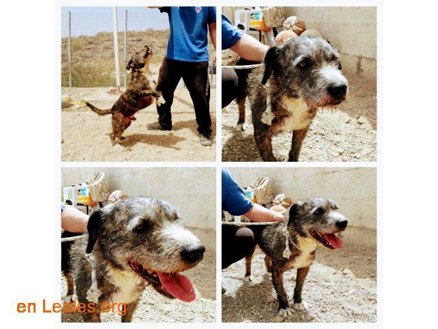 Sanchi (terrier, NO PPP) - para adoptar!