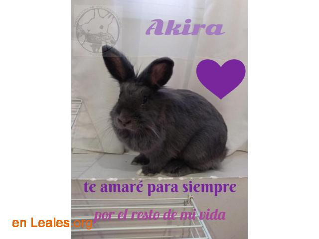 Akira busca un hogar para toda su vida