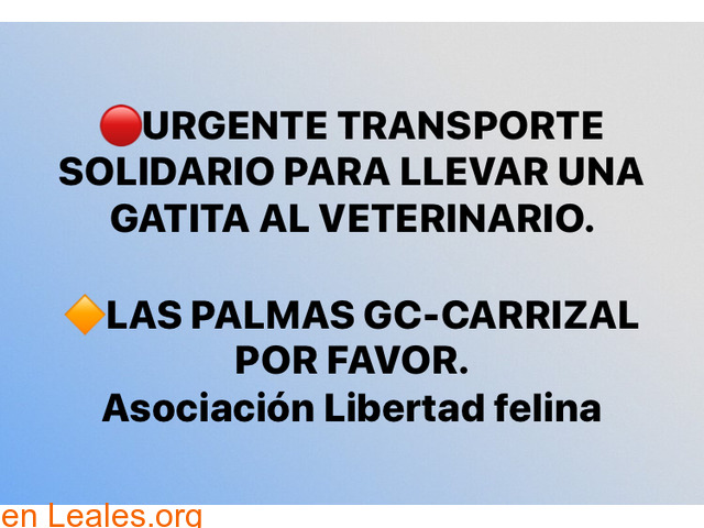 URGENTE TRANSPORTE SOLIDARIO,PARA GATITA