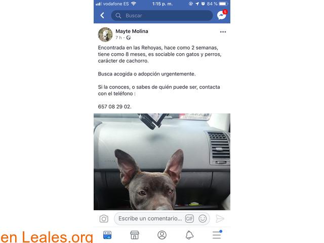 ENCONTRADA EN LAS PALMAS GC,LAS REHOYAS! - 2