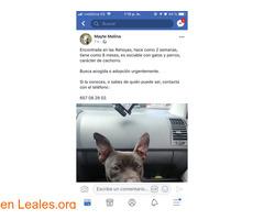 ENCONTRADA EN LAS PALMAS GC,LAS REHOYAS! - Imagen 2