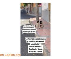 ENCONTRADA EN TELDE!!   LA CONOCES?? - Imagen 2