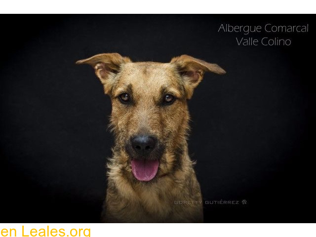 PELUSA ADOPTADA ALBERGUE VALLE COLINO - 2/3