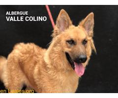 PALMERA ADOPTADA ALBERGUE VALLE COLINO - Imagen 1/3