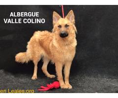 PALMERA ADOPTADA ALBERGUE VALLE COLINO - Imagen 2/3