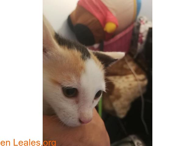 Adopción 2 gatitas, S.O.S, lo necesitan
