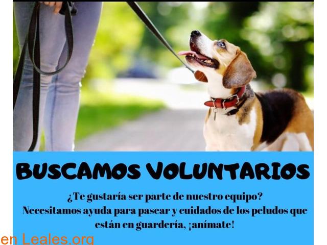 Buscamos voluntariado para guardería