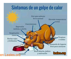 Síntomas de los golpes de calor