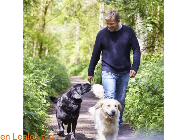 Perros y salud cardiovascular