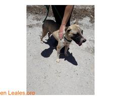 Caso urgente - Oscar en adopción! - Imagen 2