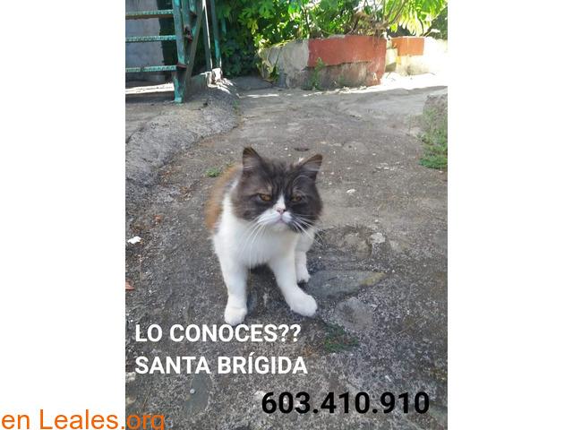 ENCONTRADO, SANTA BRÍGIDA!!!  LO CONOCES