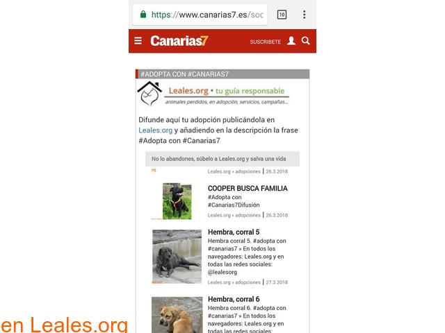 RED CANARIA DE ANIMALES SIN HOGAR - 4/10