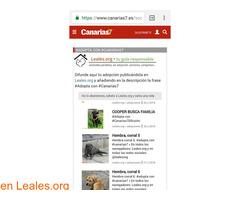 RED CANARIA DE ANIMALES SIN HOGAR - Imagen 4/10