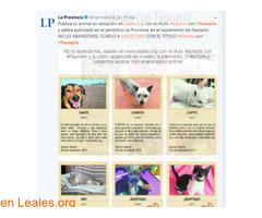 RED CANARIA DE ANIMALES SIN HOGAR - Imagen 6/10