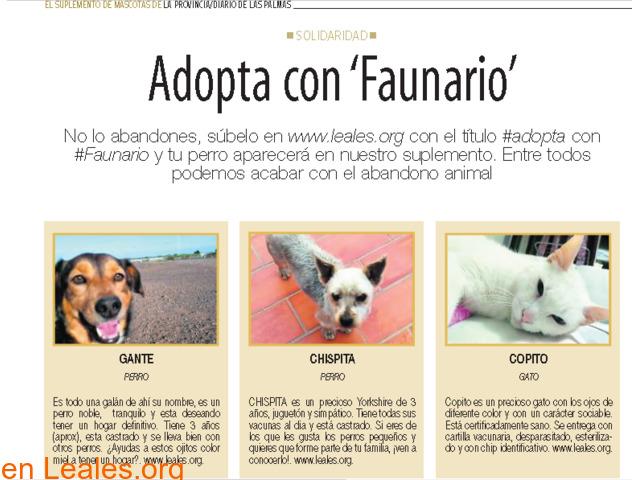 RED CANARIA DE ANIMALES SIN HOGAR - 7/10