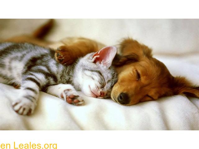 Veterinarias.es Consejos sobre mascotas - 1/1