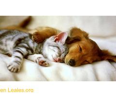Veterinarias.es Consejos sobre mascotas