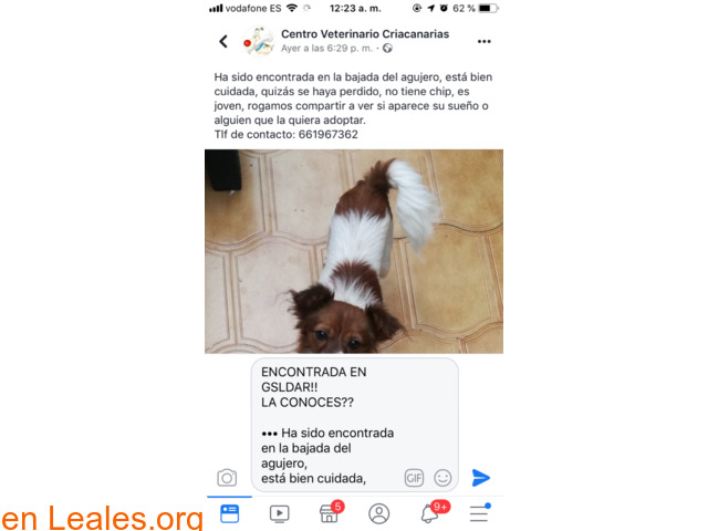 ENCONTRADA EN GALDAR!!    LA CONOCES??