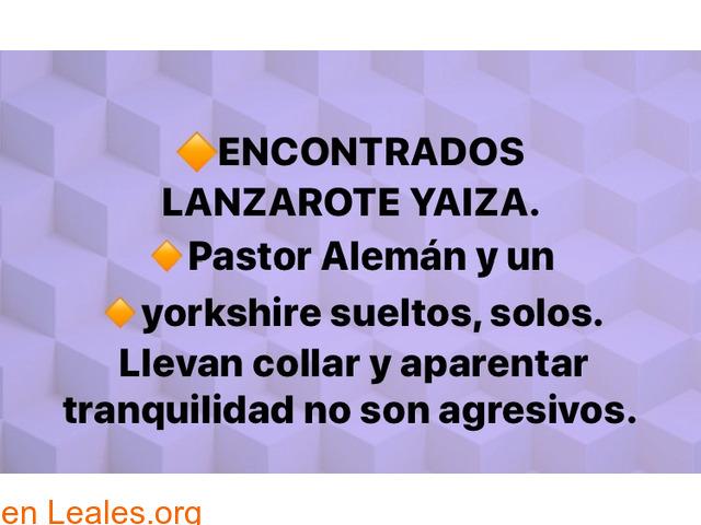 ENCONTRADOS EN YAIZA!!  PLAYA QUEMADA!!