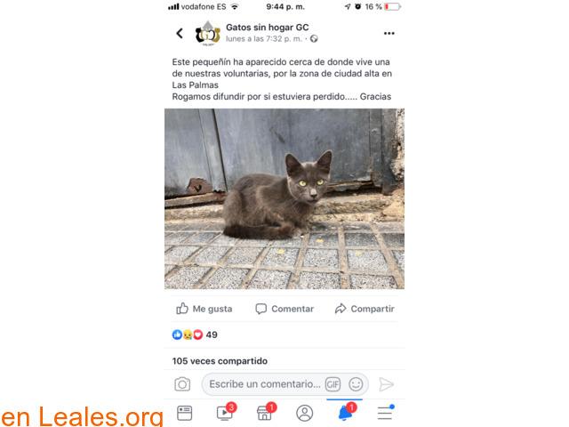 ENCONTRADO, LAS PALMAS DE GRAN CANARIA.