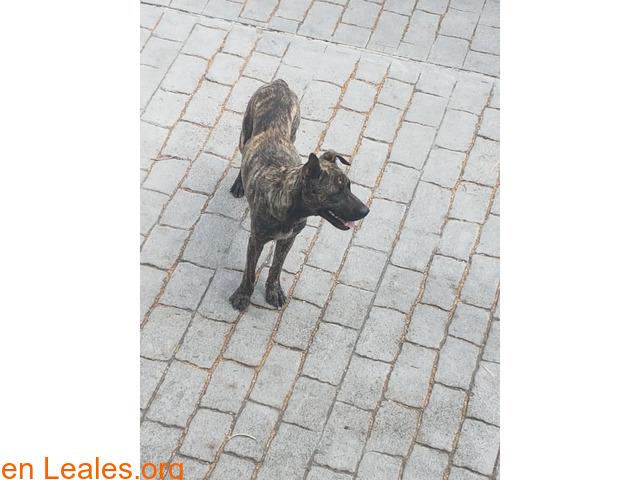 Perrita encontrada en Las Palmas