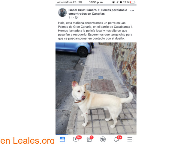 ENCONTRADO EN LAS PALMAS GC, LO CONOCES?