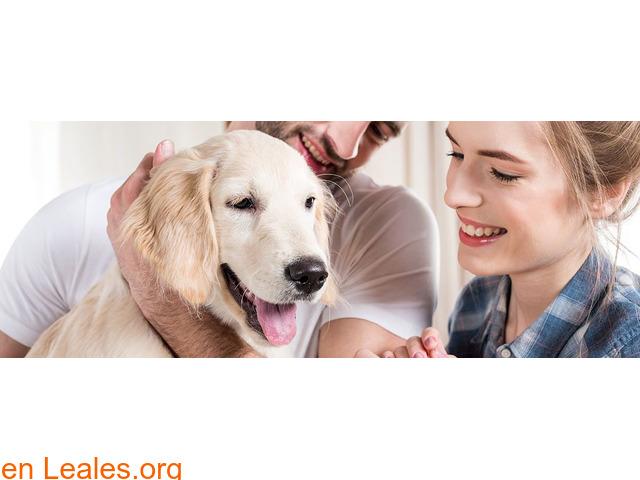 Qué necesitas para adoptar un perro