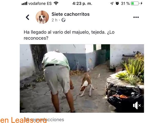 ENCONTRADO EN TEJEDA!!    LO CONOCES??