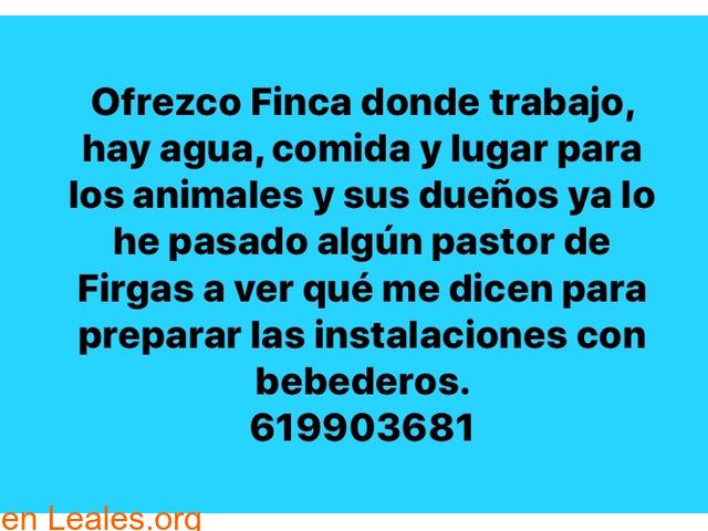 OFRECE FINCA PARA ANIMALES EVACUADOS!!