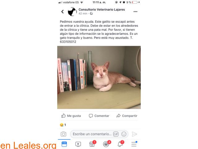 PERDIDO EN FUERTEVENTURA, LA OLIVA!! - 2