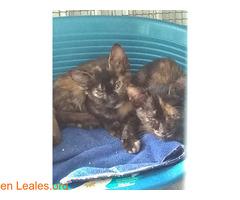 gemelas buscan adopcion