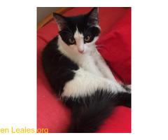 Esta gatita se escapó ¡YA EN CASA! - Imagen 1/4
