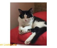 Esta gatita se escapó ¡YA EN CASA! - Imagen 2/4