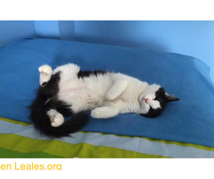 Esta gatita se escapó ¡YA EN CASA! - Imagen 4/4