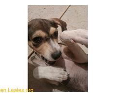 Cachorro busca familia que le adopte - Imagen 1/9
