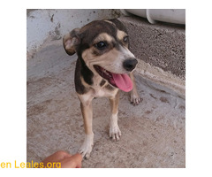 Cachorro busca familia que le adopte - Imagen 3/9
