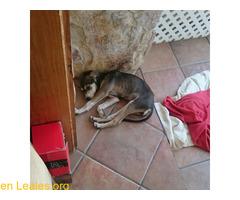 Cachorro busca familia que le adopte - Imagen 4/9