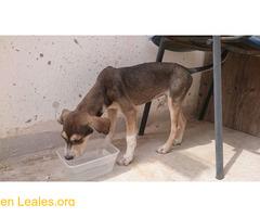 Cachorro busca familia que le adopte - Imagen 5/9