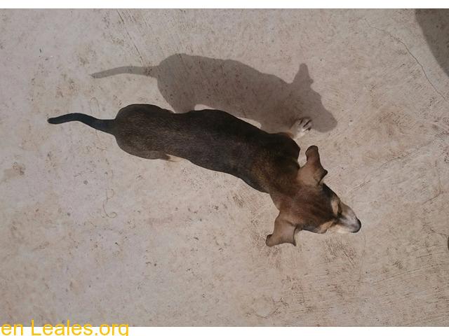 Cachorro busca familia que le adopte - 6/9