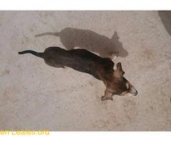 Cachorro busca familia que le adopte - Imagen 6/9