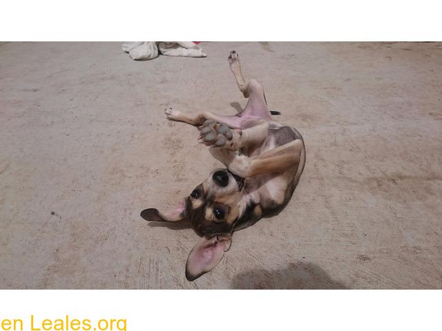 Cachorro busca familia que le adopte - 7/9