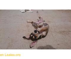 Cachorro busca familia que le adopte - Imagen 7/9