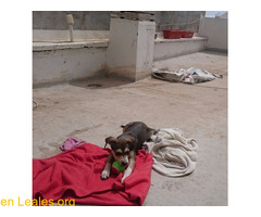 Cachorro busca familia que le adopte - Imagen 8/9