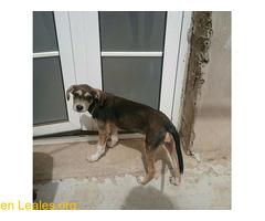 Cachorro busca familia que le adopte - Imagen 9/9