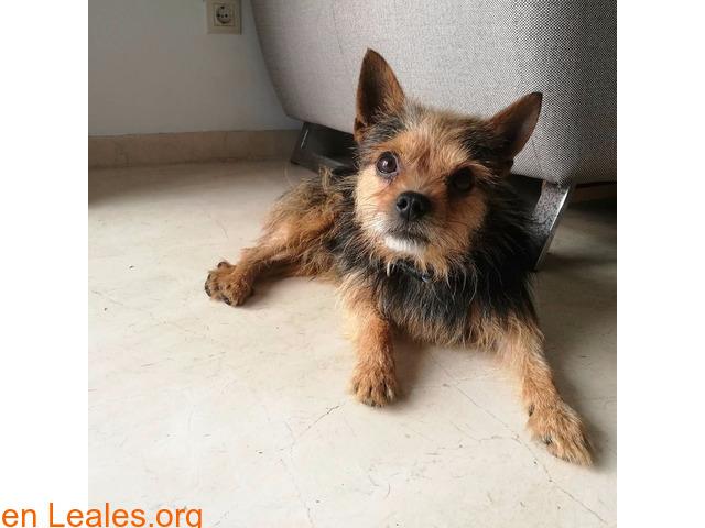 Perros Perdidos Las Palmas Gran Canaria Buscando A Su Dueño