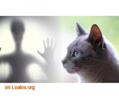 Los gatos te protegen de los espíritus