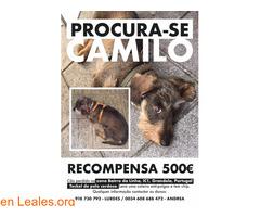 Procura-se Camilo