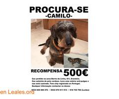 Procura-se Camilo - Imagen 3/5